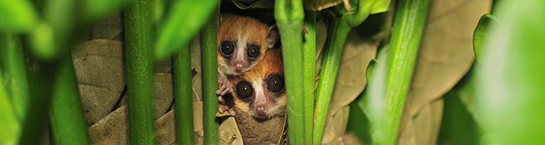 Behaviour code - Madagascar Mozaic Tour
