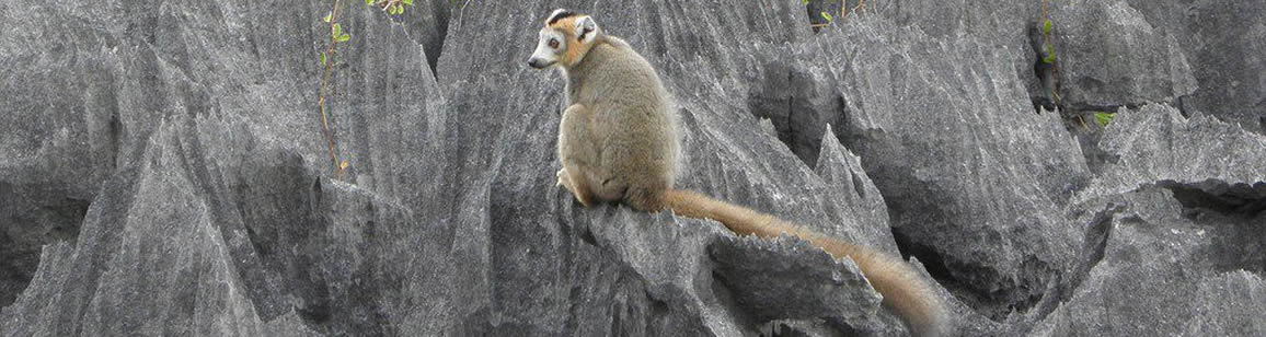 North Wildlife Tour 6N/7D - Madagascar Mozaic Tour
