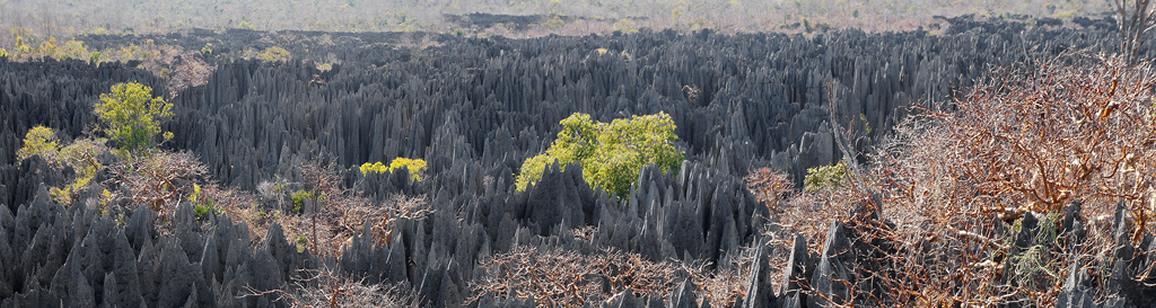 Adventure Tour 6N/7D - Madagascar Mozaic Tour