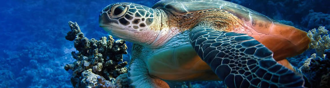 Turtle Watching 2N/3D - Madagascar Mozaic Tour