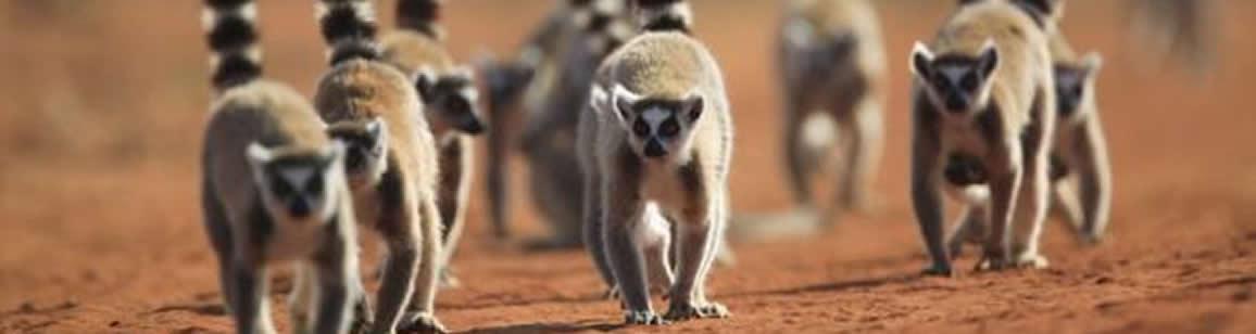 Berenty Photo Tour Extension 4N/5D - Madagascar Mozaic Tour
