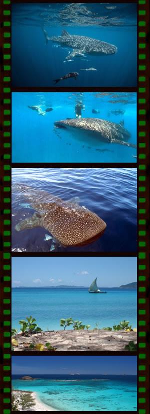 Observation Requin Baleine