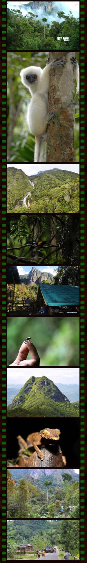 Trekking PN Marojejy