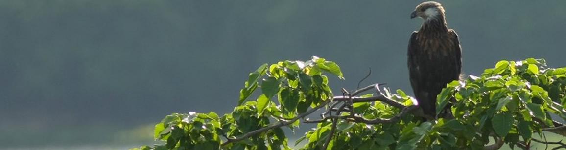 Bird Watching Extension 6N/7D - Madagascar Mozaic Tour