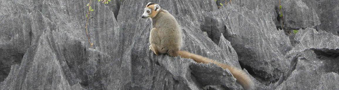 North Wildlife Tour 6N/7D - Madagascar Mozaic Tour