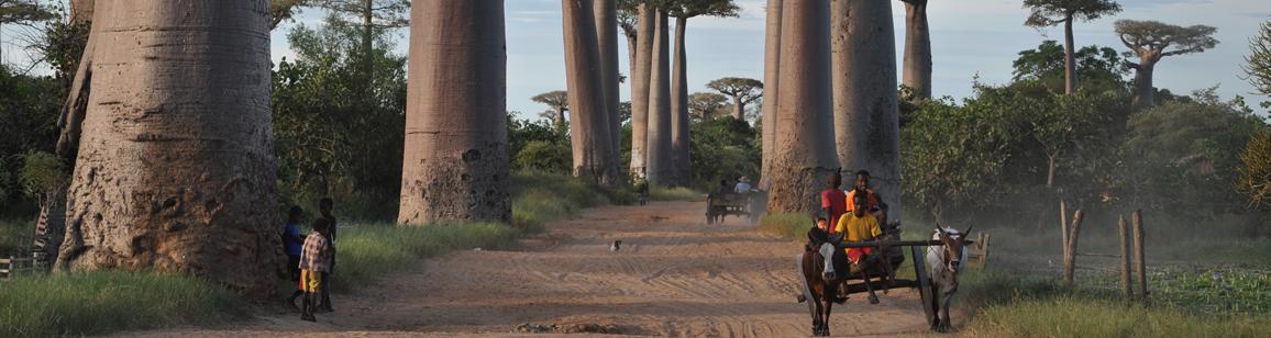 Photo Tour 11N/12D - Madagascar Mozaic Tour