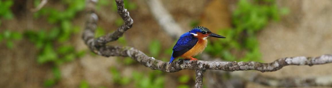 Bird watching Tour 11N/12D - Madagascar Mozaic Tour