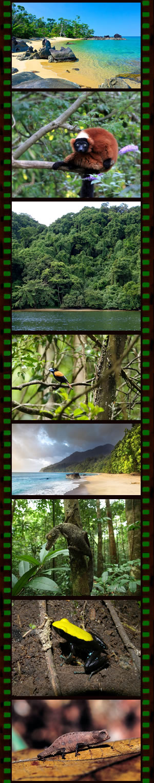Extension Voyage Naturaliste Masoala